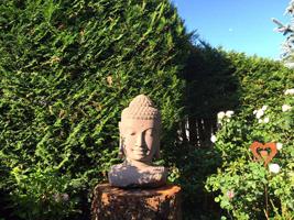 Buddha Kopf Fluss Stein