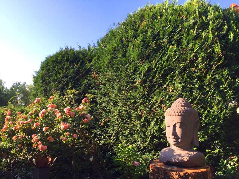 Buddha Kopf Fluss Stein natur