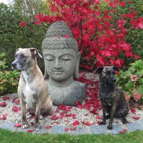Grosser Buddha Kopf